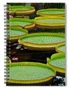 Lilly Pads Spiral Notebook