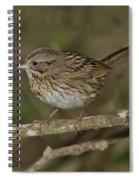 Lincolns Sparrow Spiral Notebook