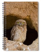 Little Owl Athene Noctua Spiral Notebook