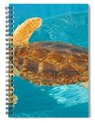 Loggerhead Sea Turtle Spiral Notebook