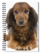 Long-haired Dachshund Spiral Notebook