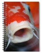 Lucky Koi 3 Spiral Notebook