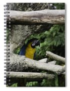 2 Macaws Framed By Tree Branches Inside The Jurong Bird Park Spiral Notebook