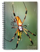 Male And Female Silk Spiders With Prey Spiral Notebook