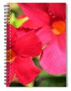 Mandevilla Named Sun Parasol Crimson Spiral Notebook