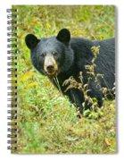 Meadow Black Bear Spiral Notebook
