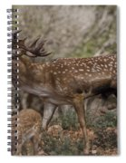 Mesopotamian Fallow Deer 3 Spiral Notebook
