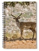 Mesopotamian Fallow Deer 5 Spiral Notebook