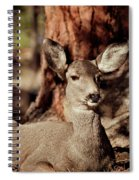 Mule Deer Doe Spiral Notebook