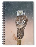 Northern Hawk Owl Spiral Notebook