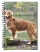 Nova Scotia Duck Tolling Retriever Spiral Notebook