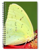 Orange Barred Sulfur Butterfly Spiral Notebook