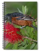 Orchard Oriole Spiral Notebook