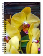 Orchid Flowers Growing Through Old Wooden Picture Frame Spiral Notebook