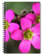 Oxalis Magnifica Spiral Notebook