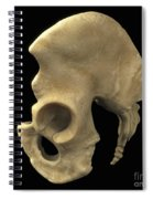 Pelvic Bones Male Spiral Notebook