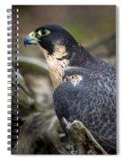Peregrine Falcon Spiral Notebook