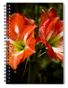 Petal Pair Spiral Notebook