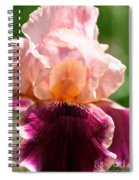 Pink Sunshine Spiral Notebook