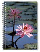 Pink Water Lily In The Spotlight Spiral Notebook