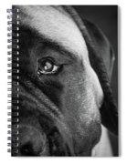 Portrait Of A Mastiff Spiral Notebook
