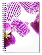 Purple Orchid-5 Spiral Notebook