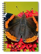 Red Admiral Butterfly Spiral Notebook