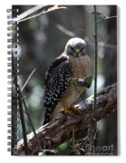Red - Shouldered Hawk II Spiral Notebook