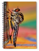 Robber Fly Spiral Notebook