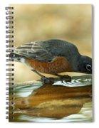 Robin Drinking Spiral Notebook