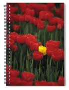 Rows Of Red Tulips With One Yellow Tulip Spiral Notebook