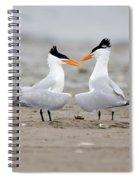 Royal Terns Spiral Notebook
