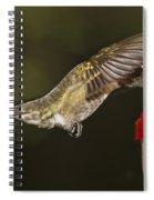 Ruby-throat Hummingbird Spiral Notebook