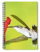 Ruby Throated Hummingbird Female Spiral Notebook
