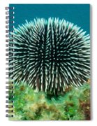 Sea Urchin Spiral Notebook