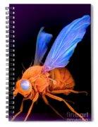 Sem Of A Fly Drosophila Spiral Notebook