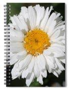 Shasta Daisy Named Paladin Spiral Notebook