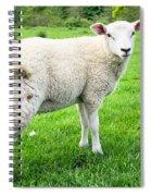 Sheep In Field Spiral Notebook