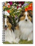 Shetland Sheepdogs Spiral Notebook