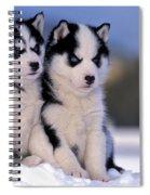 Siberian Husky Puppies Spiral Notebook