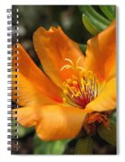 Single Portulaca Spiral Notebook