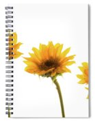 Small Sunflowers Or Helianthus Spiral Notebook