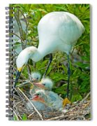 Snowy Egret Tending Young Spiral Notebook
