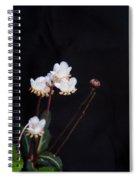 Spotted Wintergreen 3 Spiral Notebook