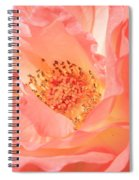 Stockton Rose Spiral Notebook