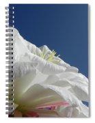 Striking Contrast Spiral Notebook