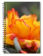 Sundial Portulaca Spiral Notebook