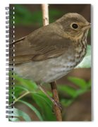 Swainsons Thrush Spiral Notebook