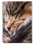 Sweet Small Kitten  Spiral Notebook