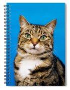 Tabby Cat Spiral Notebook